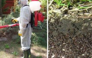 Обучение жреца: уничтожение муравьев